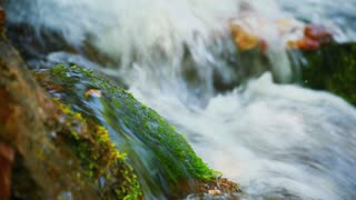 Wet green moss on stone lies in forest river