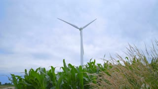 Wind generators in corn field. Wind turbine farm. Wind turbine generating electricity. Wind power generation. Renewable energy source of future. Wind power plant. Electric energy production