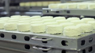 Worker put the pallet with cheese ready for packaging on other pallets at milk factory. Dairy products. Cheese production at modern food factory. Food industry