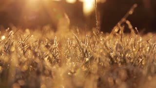 Frosty Grass in the morning