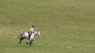 Jockey on Horse in Gallop
