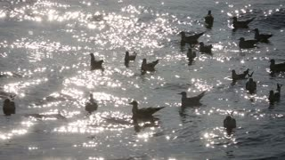 Seagulls on water by the harbour