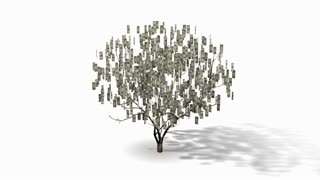 Money Tree with one dollar bills, looping 3D animation