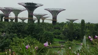 SINGAPORE - May 7, 2017: Gardens by the Bay park with the sky walk among its famous sculptural supertrees.