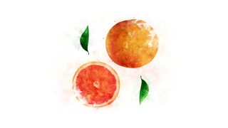 Grapefruit and its parts on the alpha channel