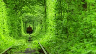 Train in a Green Tunnel of Trees