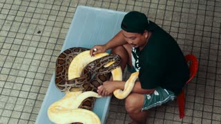 A man with two pythons in the street