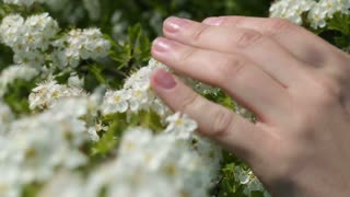 beautiful female hand touches the little white flowers. close-up.