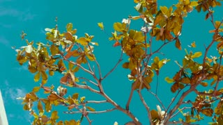 Branch of exotic tree against the blue sky