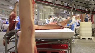 Butchering a pig factory in conditions of sterility