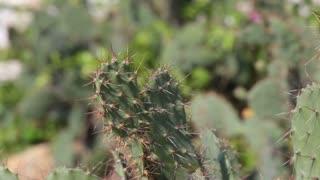 cactus closeup plant