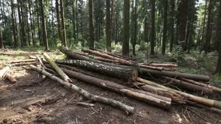 Deforestation in the woods
