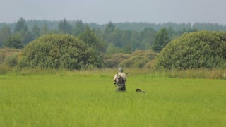Early in the morning the hunter hunts with a setter on the marsh meadow prey