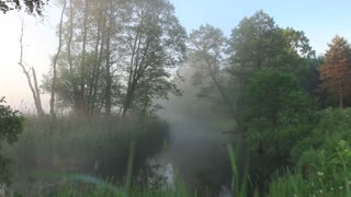 Early summer morning