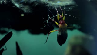 Insect bug closeup