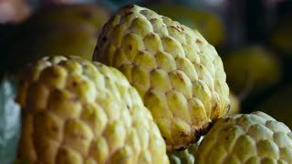 Noni fruit grows on plantations in Thailand