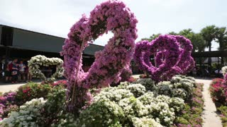 Pattaya, Thailand on November 24 A flower bed with flowers in a heart shape