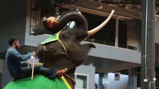 Pattaya, Thailand on November 24 Nong Nooch Tropical Garden, Elephants playing basketball Elephant Farm. Performance elephants.