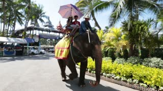 Pattaya, Thailand on November 24 Tourists ride on an elephant