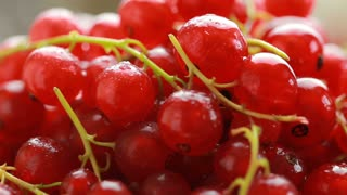 Red currant berry rotation