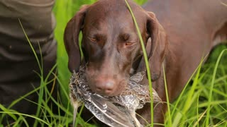 The dog brought the bird hunter