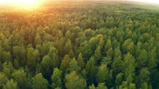 Hd 4k Forest Drone Videos Royalty Free Forest Drone Stock Footage Clips Motion Backgrounds And After Effects Templates Storyblocks