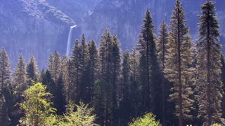 Forest 0103: A pine forest nestled in a Yosemite canyon (Loop).