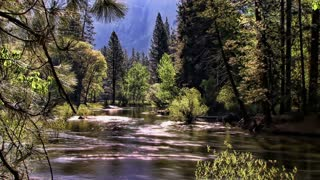 Hyper Nature 0402: A peaceful, sun-kissed river flows through a forest (Loop).