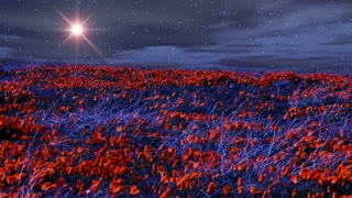 The Heavens 0210: A star shines over windy poppy fields at night (Loop).