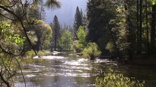 The River 0301: A peaceful river runs through a forested Yosemite valley (Loop).