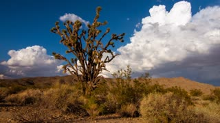 Time lapse clouds travel over a Joshua Tree in the Mojave Desert, California.