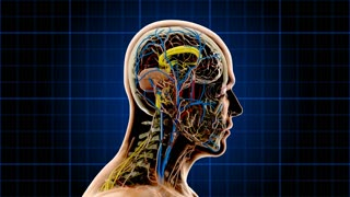 Anatomy 1003: An anatomical man rotates on a blue grid showing skeleton, nervous, circulatory and lymphatic systems.