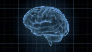 Brain 1009: Heads up display element of a holographic human brain rotating (Loop).
