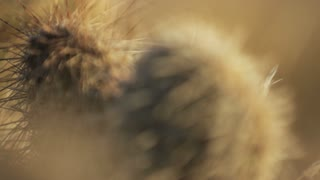 Close up panning shot of cactus in desert