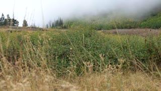 fog moving across mountainside