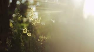 light flares across plant