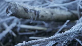 man trail running through frost covered forest
