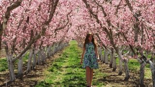Slow motion girl walking through orchard admiring pink blossoms