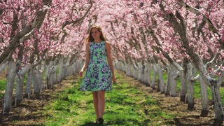 Slow motion girl walking through orchard, stops to smell pink blossoms