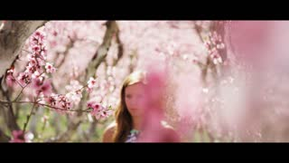 Slow motion panning shot of pink blossoms in orchard