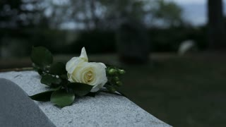 slow motion panning shot of rose on grave stone in cemetary