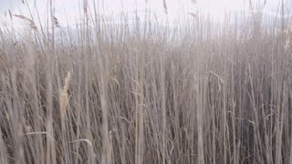 tracking shot through tall grass
