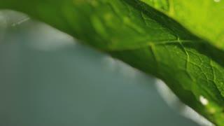 macro shot of veins of green leaves