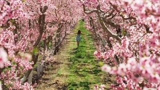 Woman Running Through Cherry Blossom Orchard