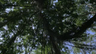 360 degree view of the forest canopy in the jungle of Ubud, Bali as the sun is shinning through the leaves.