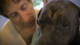 A middle aged casually dressed man gently wipes a large black great-dane dog's face with a towel drying her after a bath.