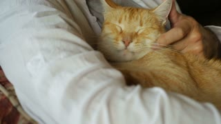 A middle aged man gently strokes his orange ginger cat in slow motion