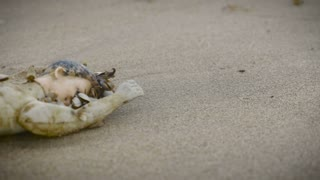 A plastic doll head and body lay on the sand covered in live shells - slider