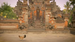 A single chicken walks in front of a Hindu temple in Bali, Indonesia as cars, motorbikes, and traffic drive by. Nobody notices this calm place of worship amongst the chaos of the city.