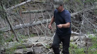 A sportsman walks by fallen trees with a fishing rod and lure in the wilderness of Montana